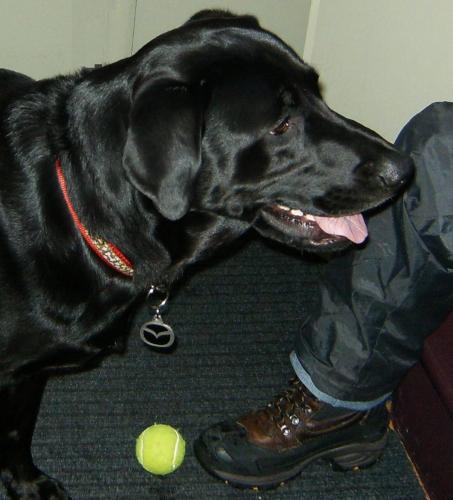 chien,salle Wilfrid-Pelletier, Montréal