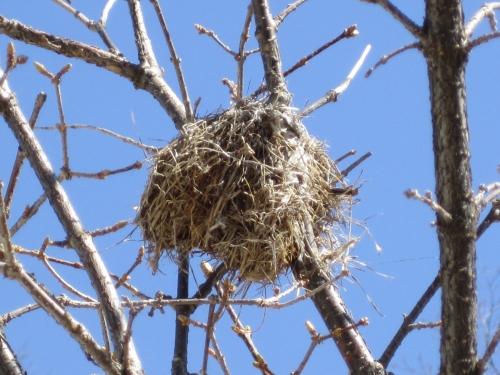 nid,oiseau,branche,poème