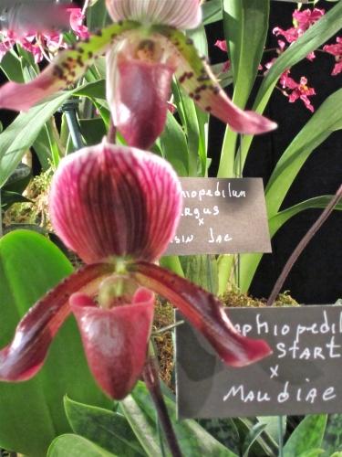 orchidées,insectes,vanille