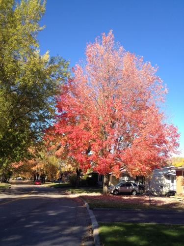 arvida,automne,arbres,feuilles,rouge