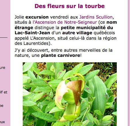 michel sarrazin,sarracénie pourpre,plante carnivore