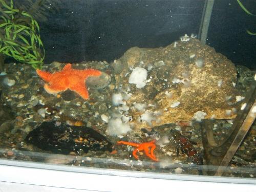 aquarium du québec,découverte émission,phoque,morse,ours blanc