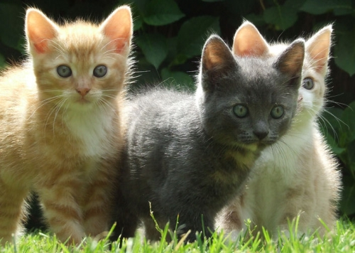 chat,chatte,zoé,accouchement,marabout-flash
