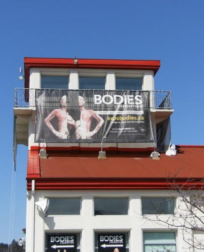 bodiesvert3.jpg