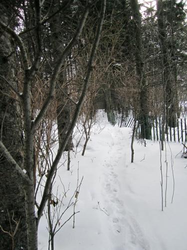 arvida,marche,hiver,église saint-jacques