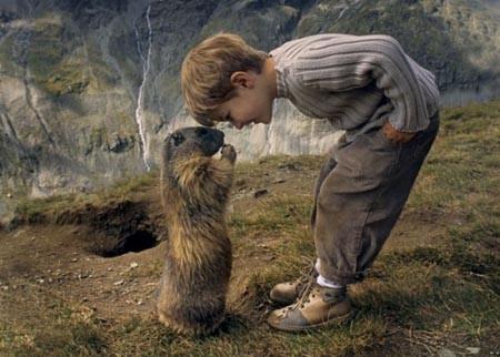 graisse de marmotte,emplâtre,bradcoplast