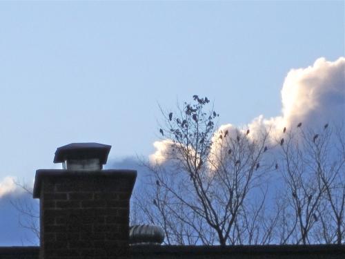 nuages, ciels, Arvida, oiseaux
