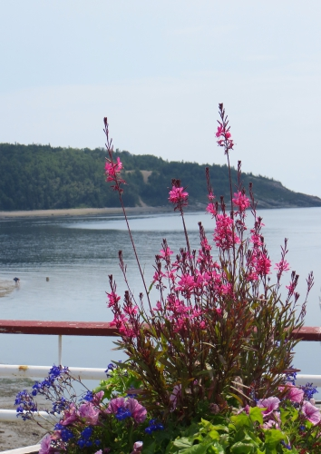 tadoussac,excursion