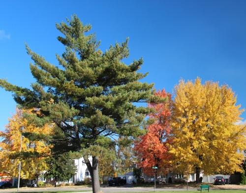 automne, couleurs, Arvida, feuilles, arbres