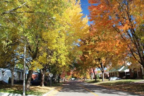 automne,couleurs,arvida,feuilles,arbres