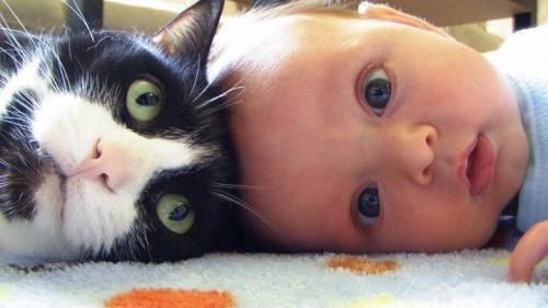 enfant,bébé,chat,regard