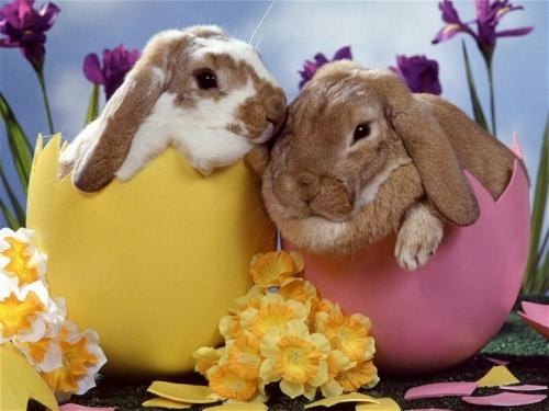 Pâques,lapin, stabat mater, rossini, pavarotti, cujus animam