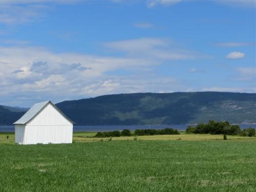 L'Anse-Saint-Jean, ferme,grange jaune,vaches,nature,verdure