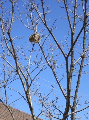 nid,oiseau,branche