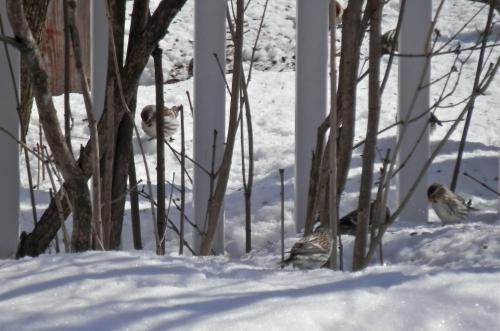 oiseaux,photo, neige
