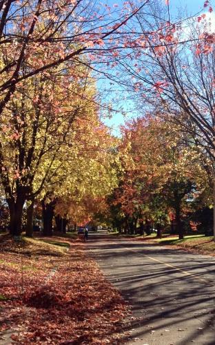 Arvida, automne, arbres, feuilles, rouge